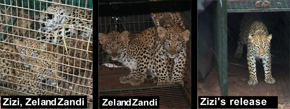 Zizi, zel and Zansi